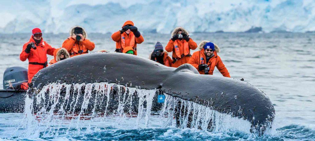 Beste tijd Antarctica