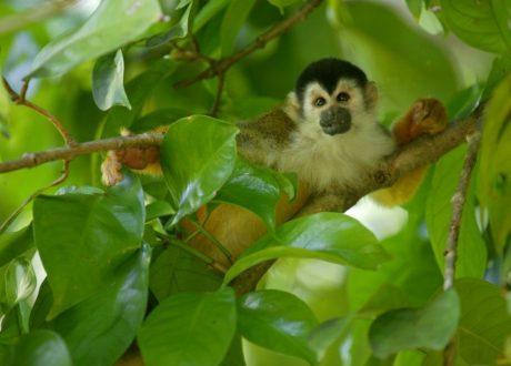 Costa Rica © Patrick Endres NH
