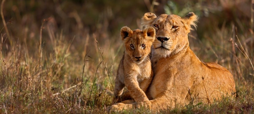 Leeuwen Rwanda