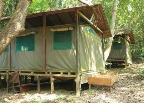 Akaka Forest Camp - Loango