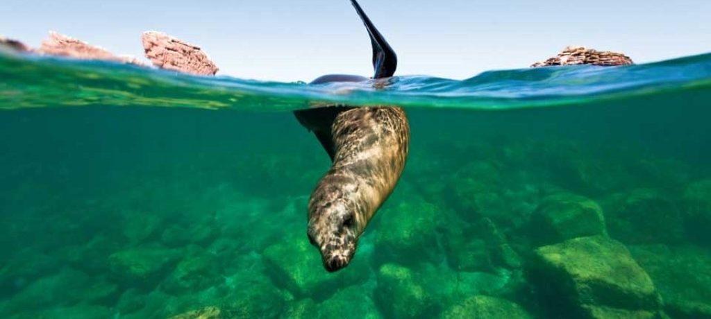 Snorkel met nieuwsgierige zeeleeuwen, Mexico