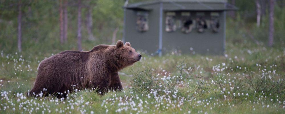 Artic safari Basecamp, Oost Finland