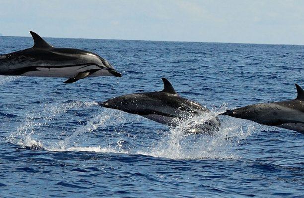 Azoren natuurreizen