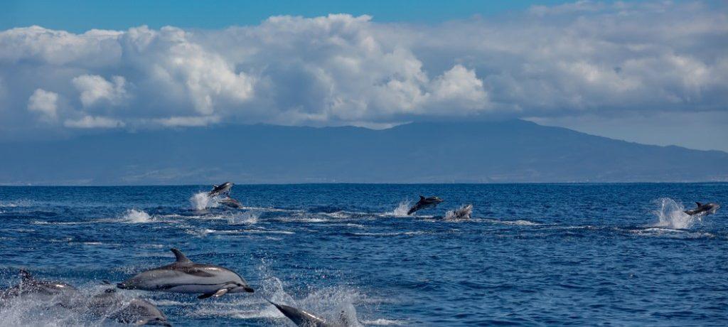 Gestreepte dolfijnen