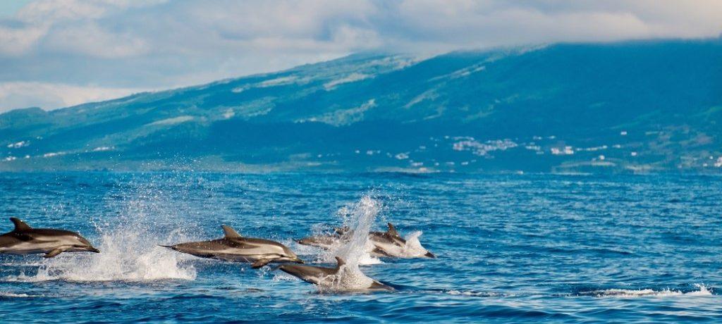 Gewone dolfijnen
