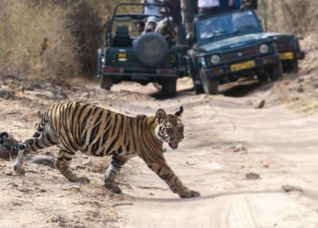 Bandhavgarh (17a)