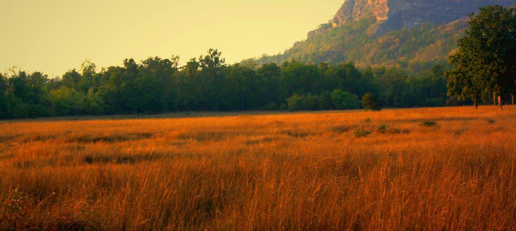 Foto: © Meenakshi Madhavan