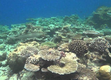 Bandos House Reef
