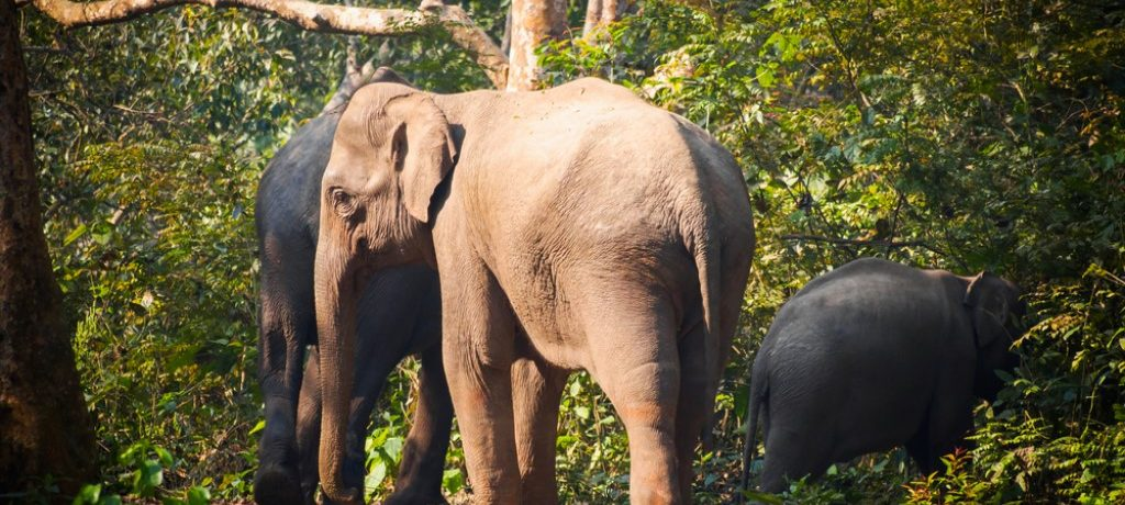 Bardia National Park (6)