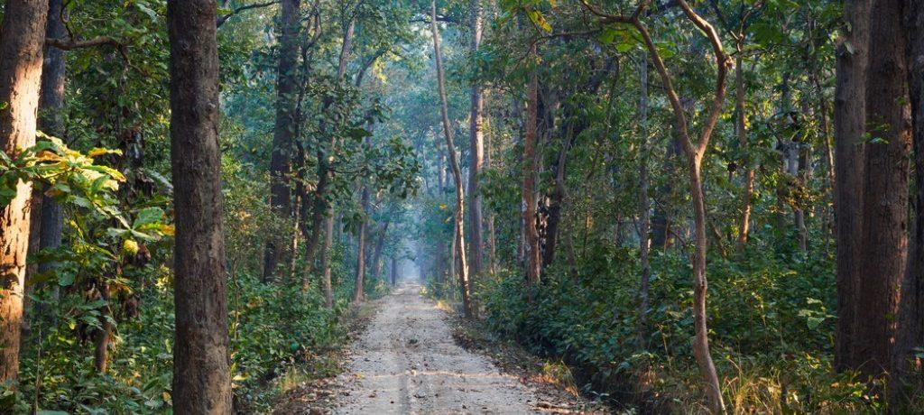 Bardia National Park (7)