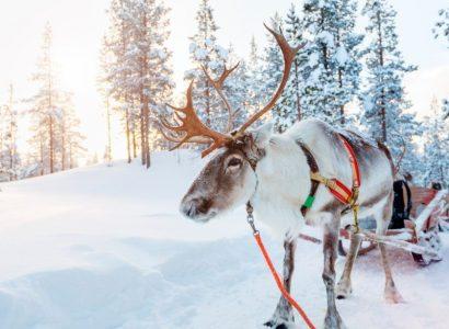 Activieiten Finland