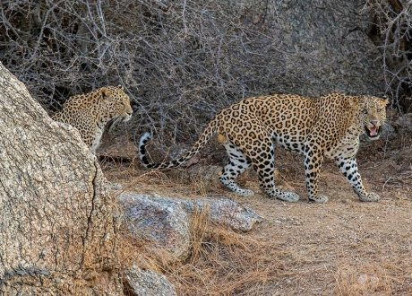 Bera Leopard Lodge