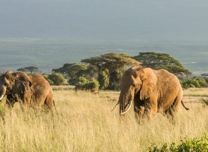 Tanzania Zanzibar vakantie,Big five Serengeti, Wildlife Tanzania