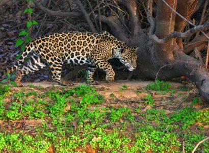 Foto: Zapa © Natural Habitat Adventures