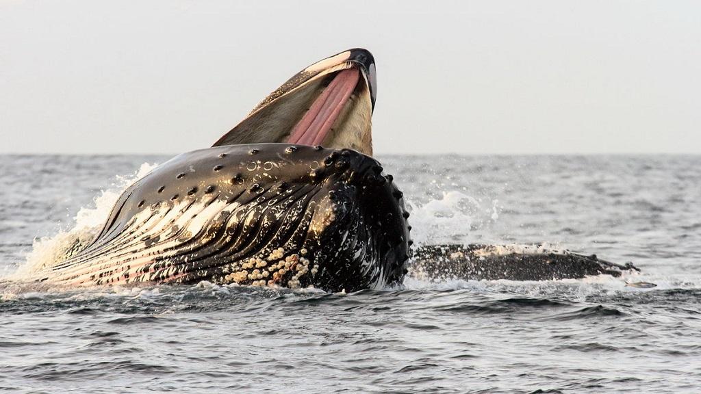 Walvissen spotten in Noorwegen