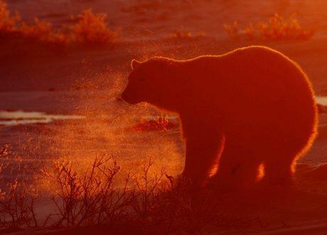 Foto: Andrew Corbett © Natural Habitat Adventures