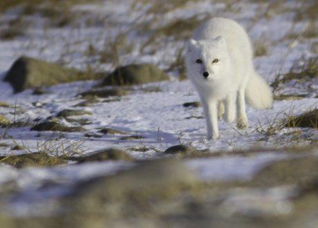 Foto: Brad Josephs © Natural Habitat Adventures
