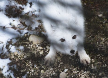 Foto: Colby J. Brokvist © Natural Habitat Adventures