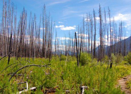 Fireweed Trail, Kootenay, Canada