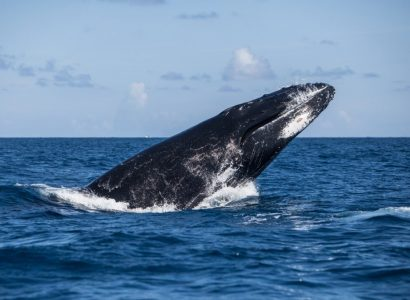 Walvissen spotten in Noord Amerika