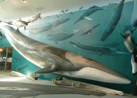 Walvismuseum Mingan, Canada