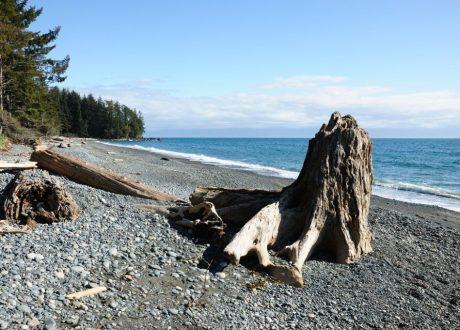 Pacific Rim, Canada