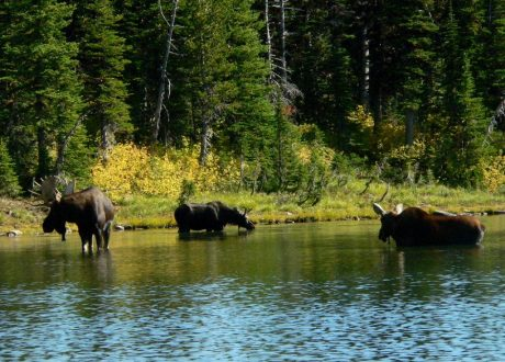 Bison Paddock, Waterton Lakes, Canada