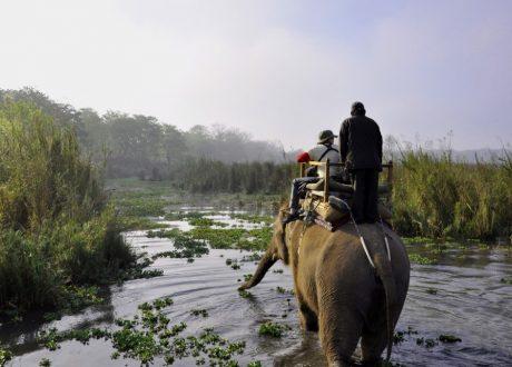 Olifant safari
