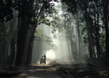 Foto: © Deepti Dhamal