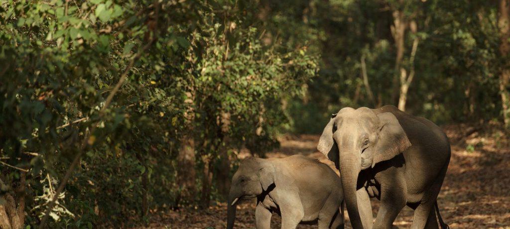 Foto: © Rohit Varma