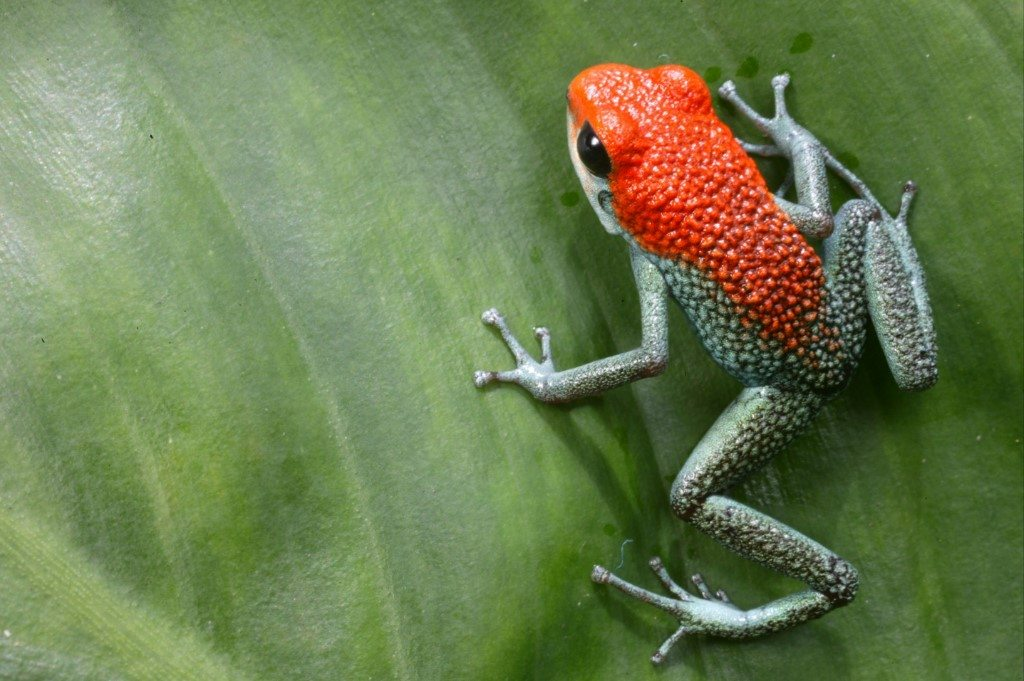 Foto: Patrick Endres © Natural Habitat Adventures