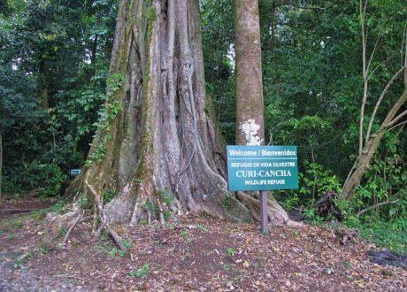 Curi Cacha Reserve