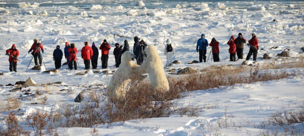 IJsberen spotten