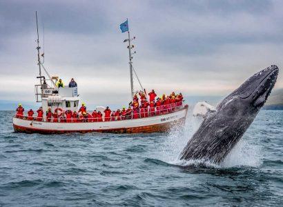Walvissen spotten in Europa
