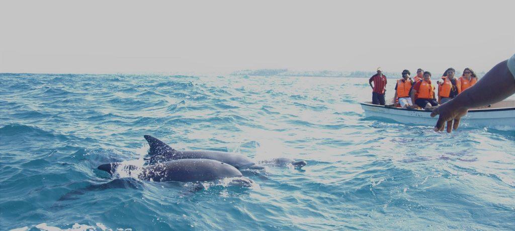 Dolfijn Tour, Zanzibar Foto: Prof.Chen Hualin