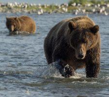 Foto: Drew Hamilton - © Natural Habitat Adventures