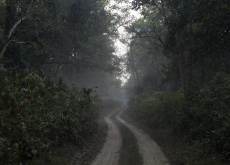 Foto: © Anant Shastri