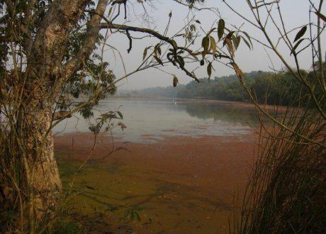 Dudhwa NP - Arshadhs