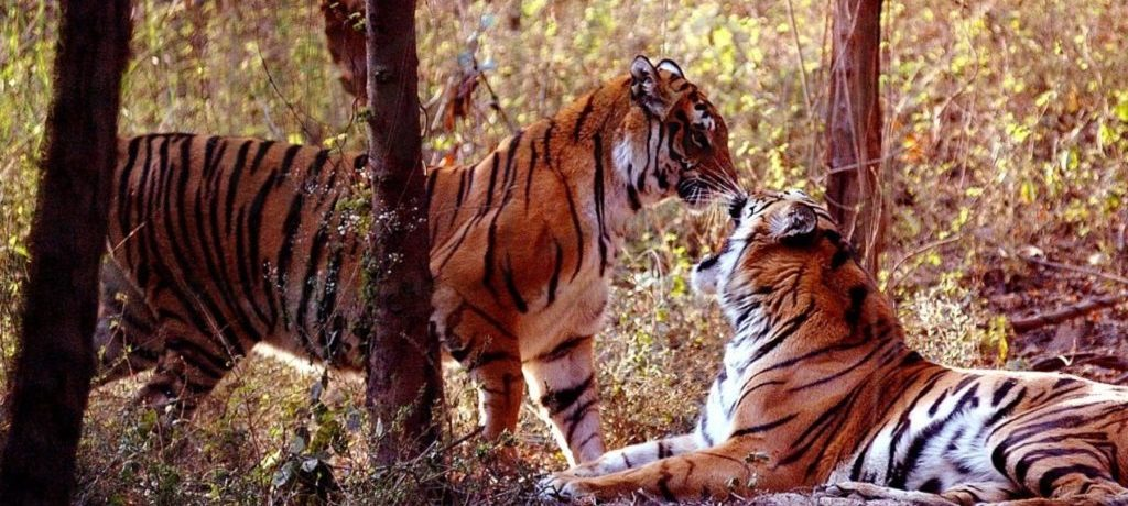 Dudhwa National Park - Darshan Sen