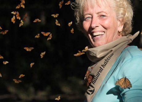El Rosario Butterfly Sanctuary - Tom Nolle