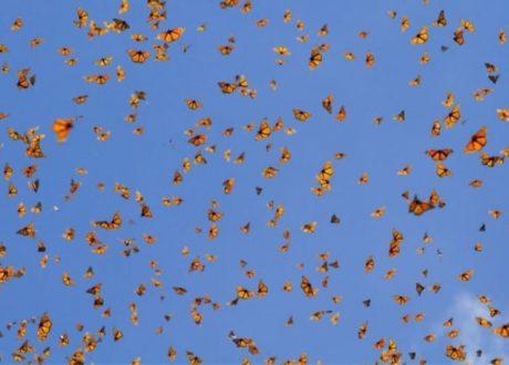 El rosario Butterfly Sanctuary - Court Whelan