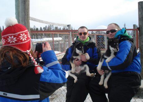 Huskysafari Fins Lapland (Harriniva)