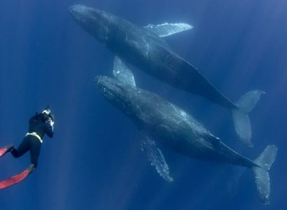 Zwemmen met walvissen