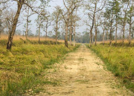 Suklaphanta Wildlife Reserve