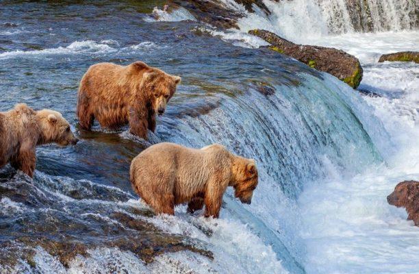 Wildlife Canada