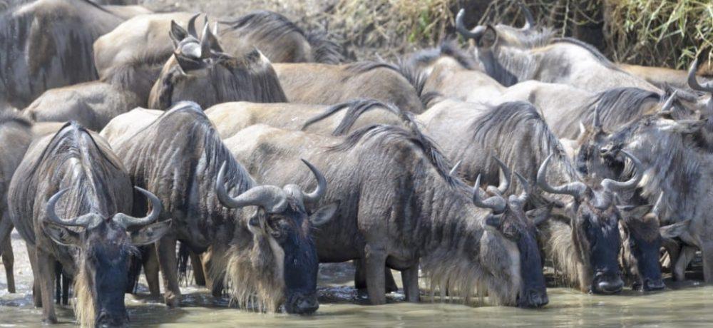 Grumeti River Serengeti