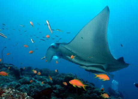 Vilamendhoo House Reef