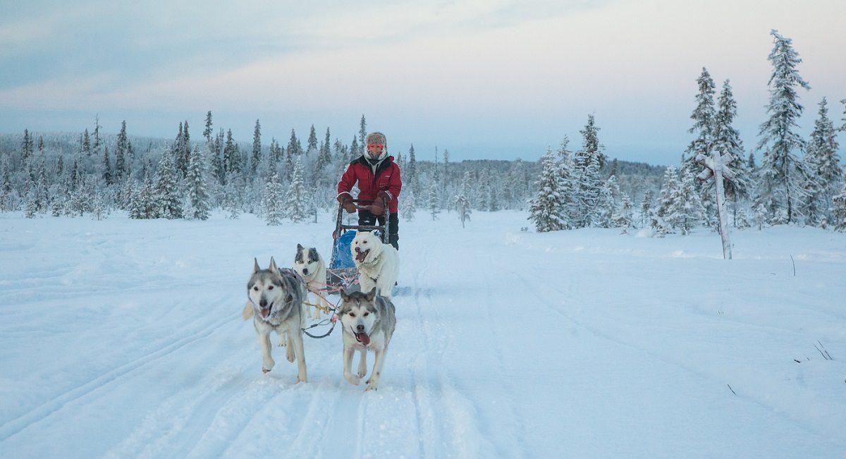 Huskysafari in Fins Lapland (Harriniva), Noord Finland