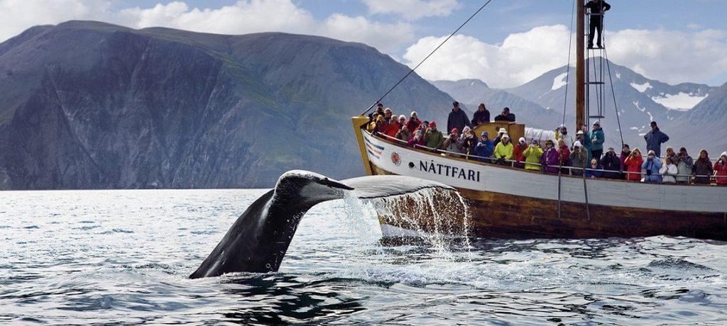Husavik, Skjalfandi, walvis spotten, IJsland