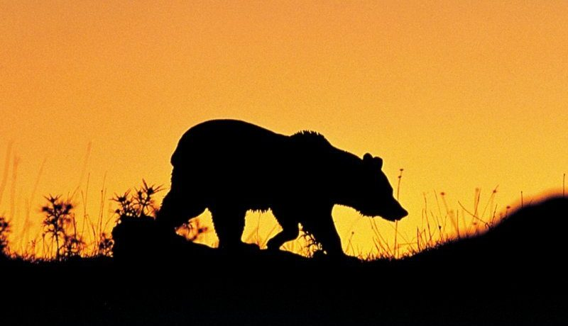 beren en wolven in de abruzzen